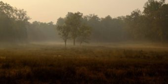 madhya pradesh rural landscape