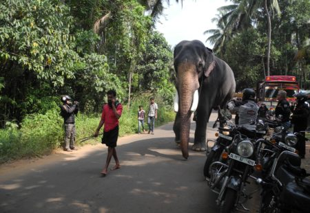 <strong>What's your most memorable encounter on the roads of Kerala?</strong> Elephants! One day I had followed a different route and my riders and I spotted some Indians who were cleaning elephants. They're used a lot for religious ceremonies here. The people were really pampering them! We were able to watch them for a long time and even approach them, it was great!   <strong>Do you have a favorite place in South India?</strong> Yes, I love Munnar with its tea plantations. We also pass through eucalyptus forests, which are simply magic, it feels like a fairy tale!