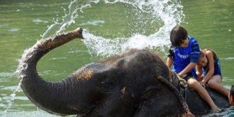 elephant fun nepal