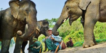 meeting elephants laos