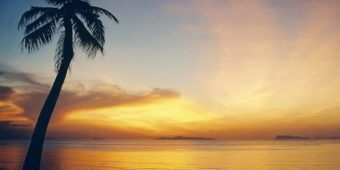 coconut tree sunset