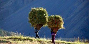 farming rural india