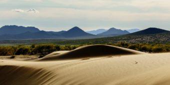 gobi desert steppe