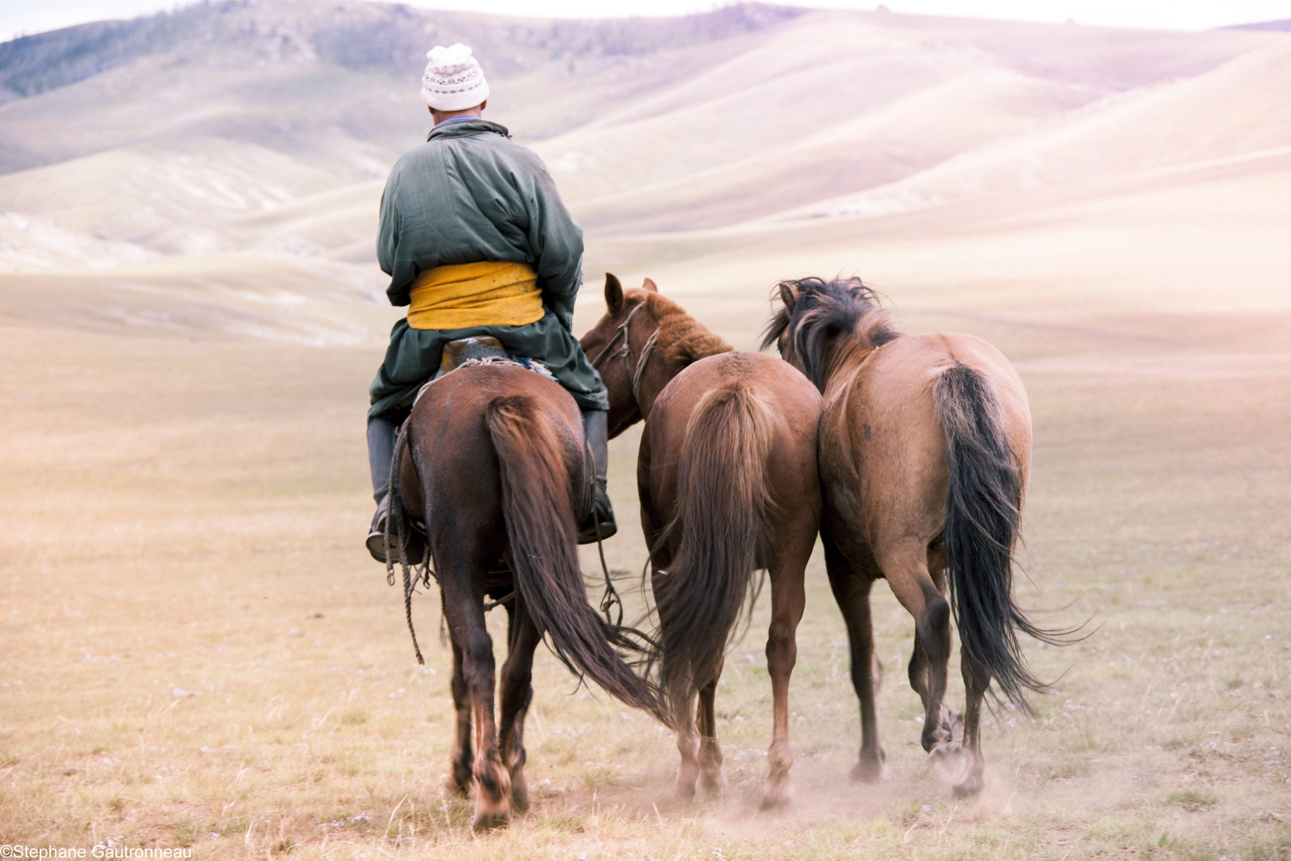 steppe horses mongolia