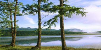 tree sea mongolia