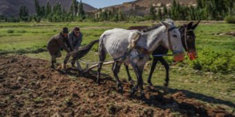 horse in countryside of morocco