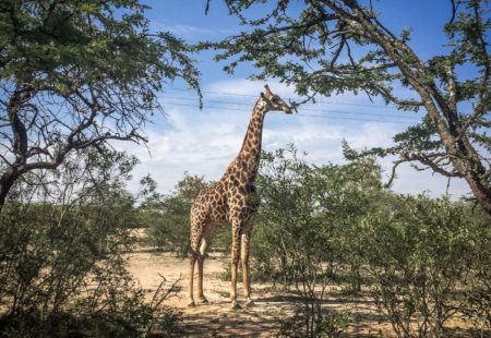 """<strong>3- What makes this tour different from your Cape Province tour?</strong>  One of the biggest differences is that you get more chances to spot wildlife up close, not just in the game reserves but also in the large national parks, like <a href=""""https://hluhluwegamereserve.com/"""">Hluhluwe National Park</a> and <a href=""""http://www.krugerpark.co.za/"""">Kruger National Park</a>, which are among some of the most beautiful wildlife reserves in the world. Also, The Cape is unlike the rest of South Africa as it is strongly influenced by colonisation and the ever-present Dutch heritage. This second tour gives us a real feel for Africa and the opportunity to experience a change of scenery, another climate and a much richer mix of cultures. We are also exposed to the Zulu culture, the cradle of the country's history. What's more, crossing borders is an added bonus with this tour as you get to visit several countries on just one trip."""
