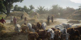 farmer odisha