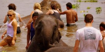 bathing elephants nepal