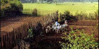 farmland north india