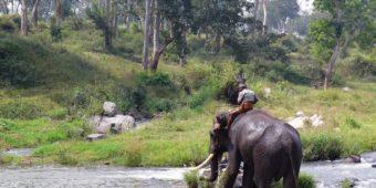 elephant south india