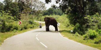 elephant road sri lanka