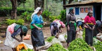 tea farmers sri lanka
