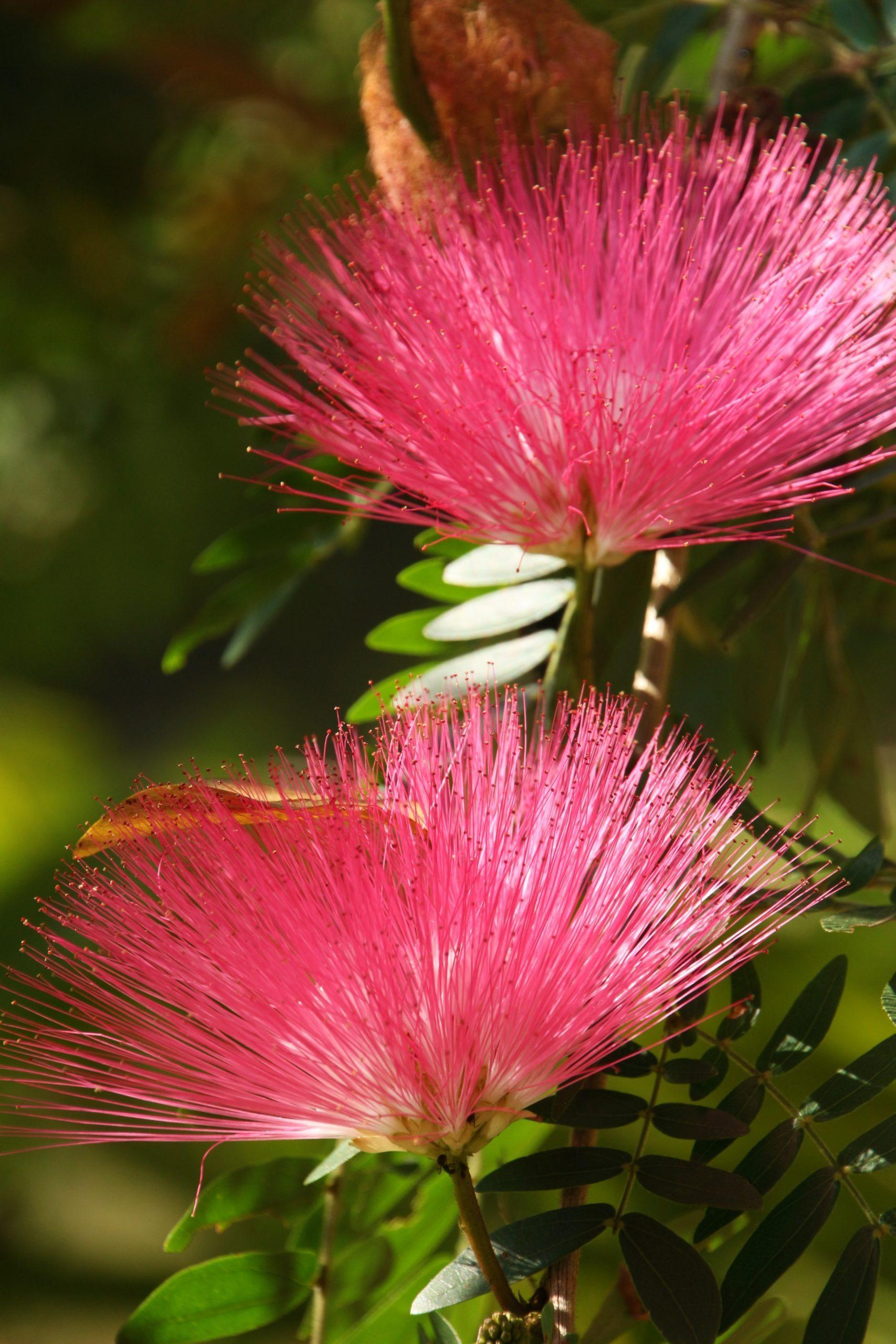 flower north thailand