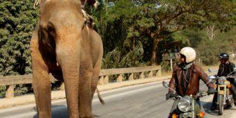 elephant bike north thailand