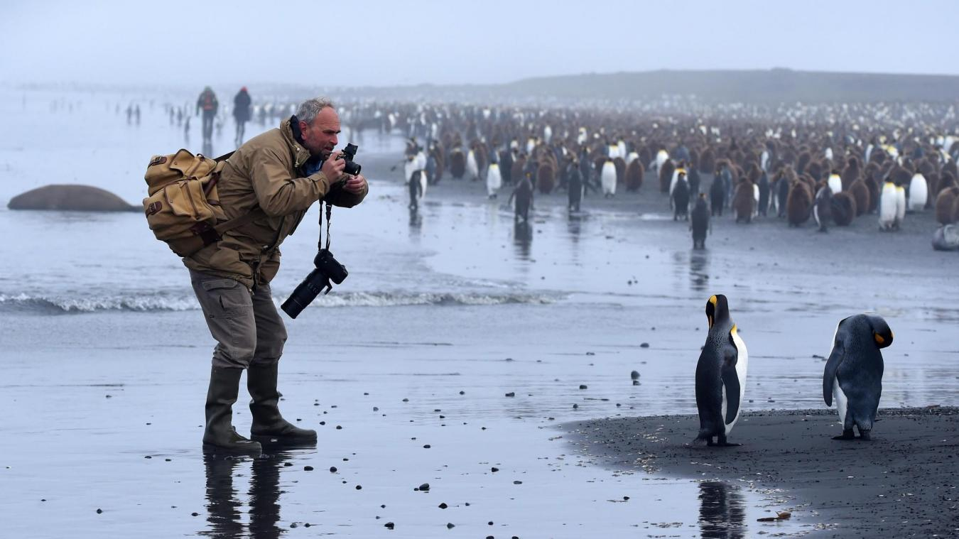photographer ice penguins