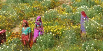 flower field rajasthan india