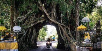 Bunut Bolong indonesia