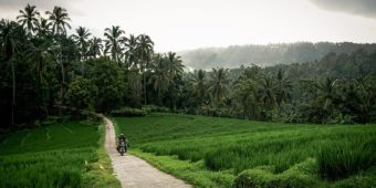 road trip indonesia paddy field