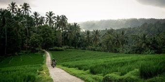road trip indonesia paddy field