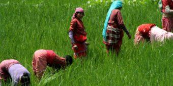 women farming nepal