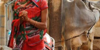woman children cow rajasthan