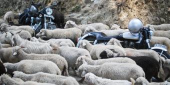 sheep motorcycle india