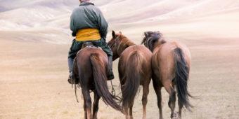 horses sand mongolia