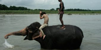 elephant children nepal