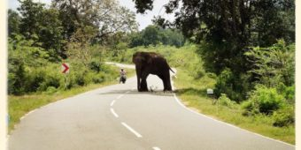 elephant road sri lanka