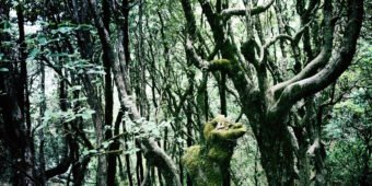 forest himalaya india