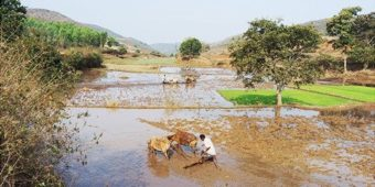 farmer odisha village india