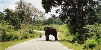 sri lanka route elephant
