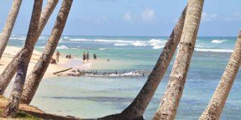 sri lanka beach sea coconut tree